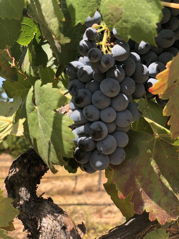 Scott Harvey Wines: 35265 Willow Ave, Clarksburg, CA