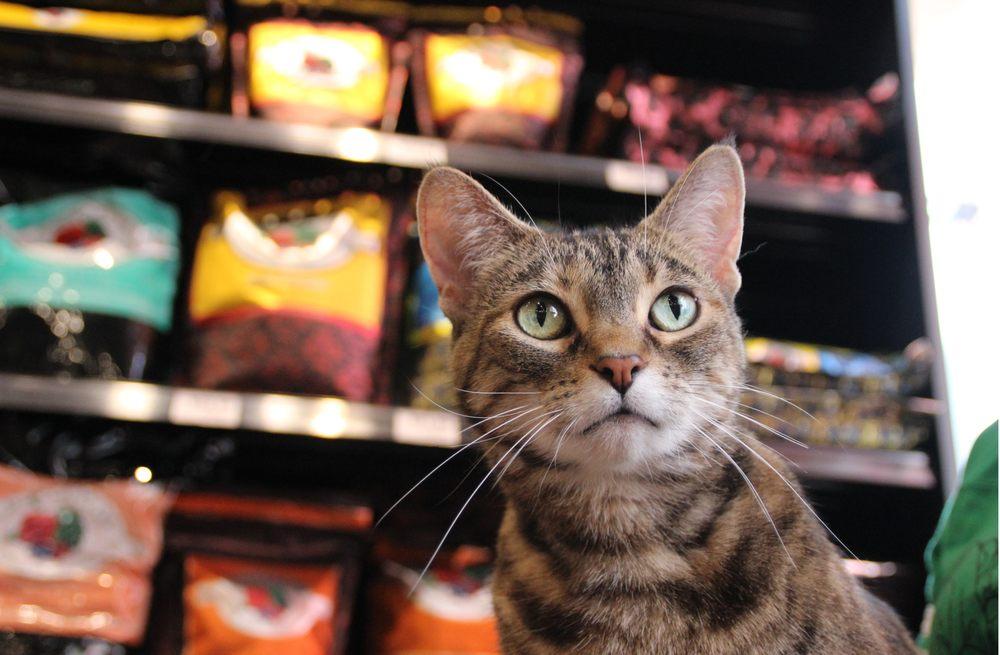 Chuck & Don's Pet Food & Supplies: 6380 S Parker Rd, Aurora, CO