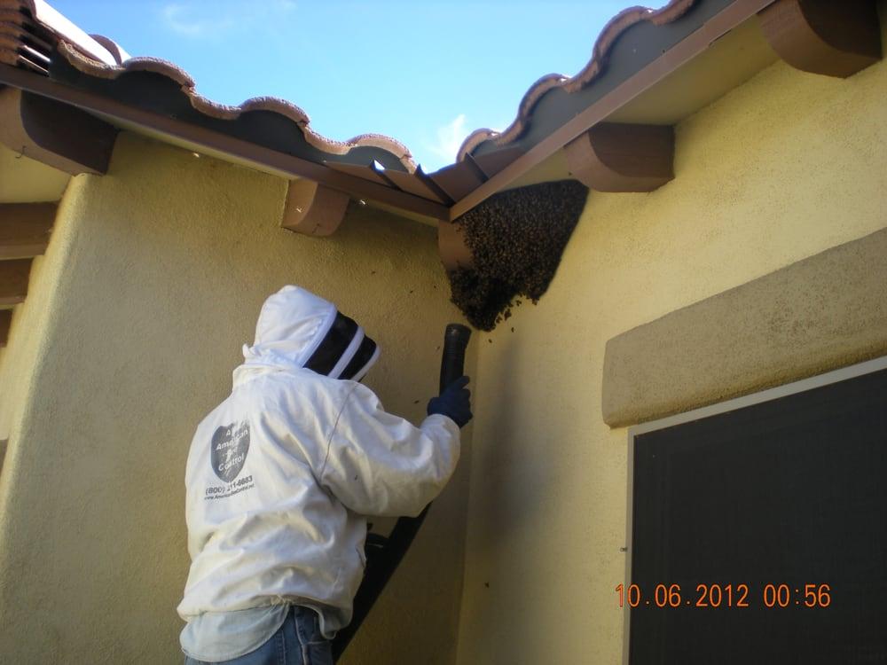 American Bee Control: Tucson, AZ