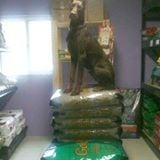 Foxy's Pet Foods and Supplies: 635 Main St, Limestone, NY