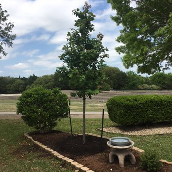 Photo Of Ted S Landscaping Services Tree Nursery Austin Tx United States