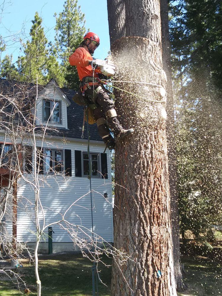 Timberwolfe Tree Service: 15444 Archery Vw, Truckee, CA
