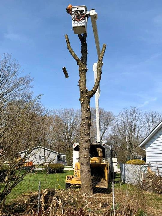 Aaron's Perfect Cut Tree Service: Knox, IN