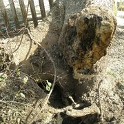 Storm Damage Photo of Full Canopy Tree Care - Austin TX United States. & Full Canopy Tree Care - 15 Photos - Tree Services - Austin TX ...