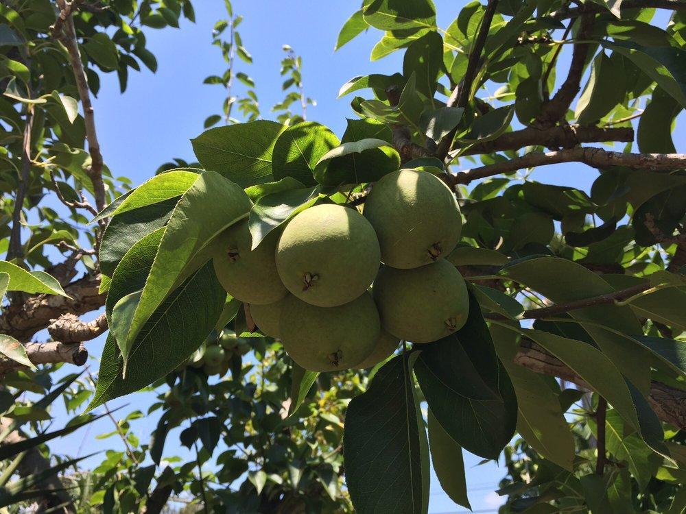 Exotica Rare Fruit Nursery - 193 Photos & 75 Reviews