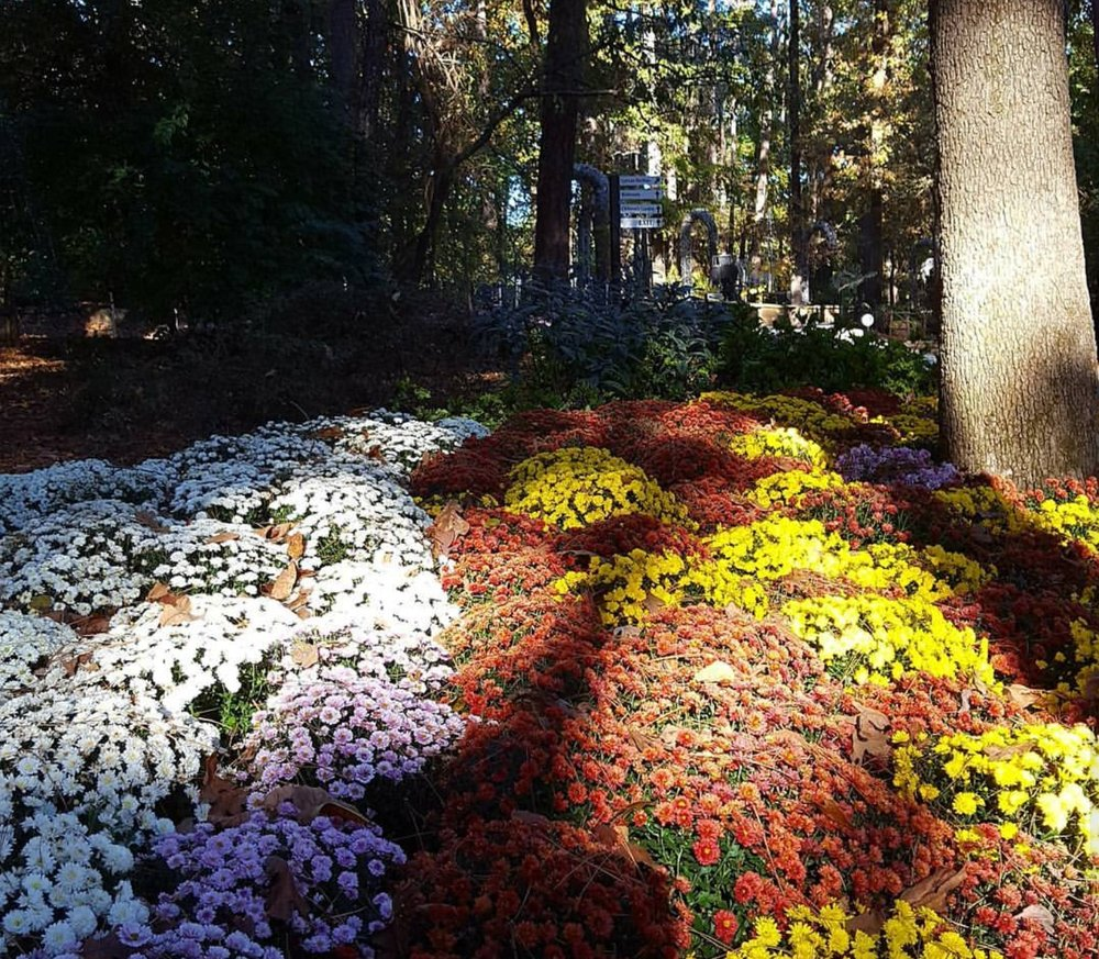 Beautiful Flowers Yelp