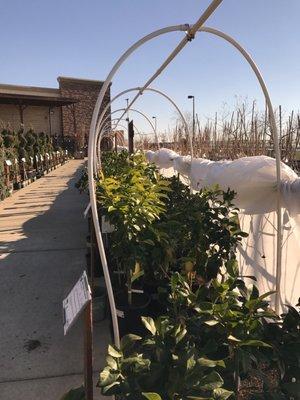 Green Acres Nursery Supply 205 Serpa Way Folsom Ca Nurseries Mapquest