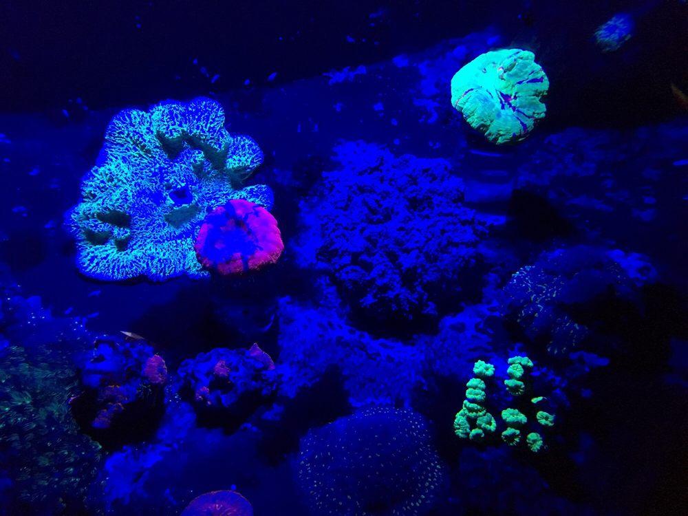 photos pour aquarium la rochelle yelp. Black Bedroom Furniture Sets. Home Design Ideas