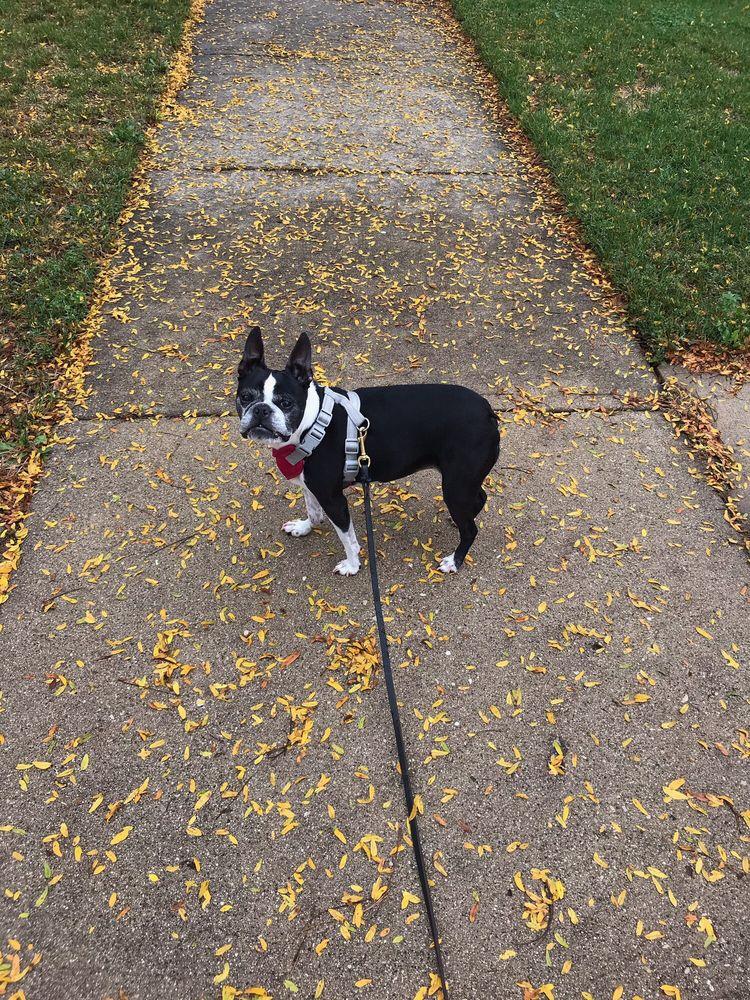 Superdog Dog Walking Services: Arlington Heights, IL
