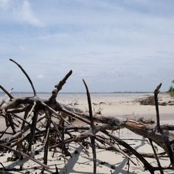Photo Of Bunche Beach Preserve Fort Myers Fl United States Low Tide