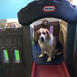 Chasing Tails - 36 Photos & 25 Reviews - Pet Groomers ...