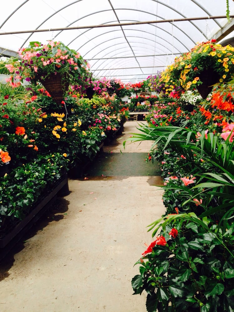 Cierech Greenhouses: 23 Winters Rd, Phillipsburg, NJ