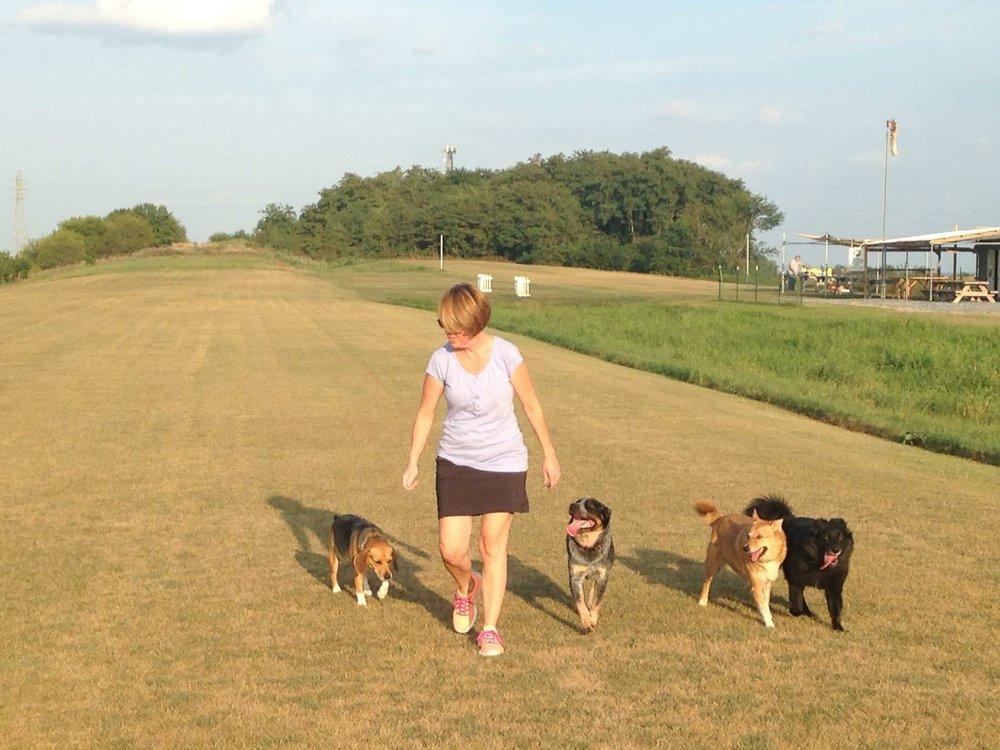 Triple M Dog Walking and Pet Sitting: Lancaster, PA