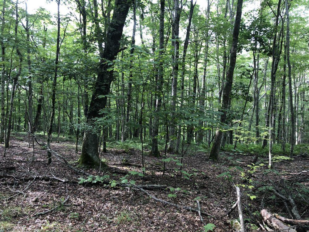 Droop Mountain Battlefield State Park: Hillsboro, WV