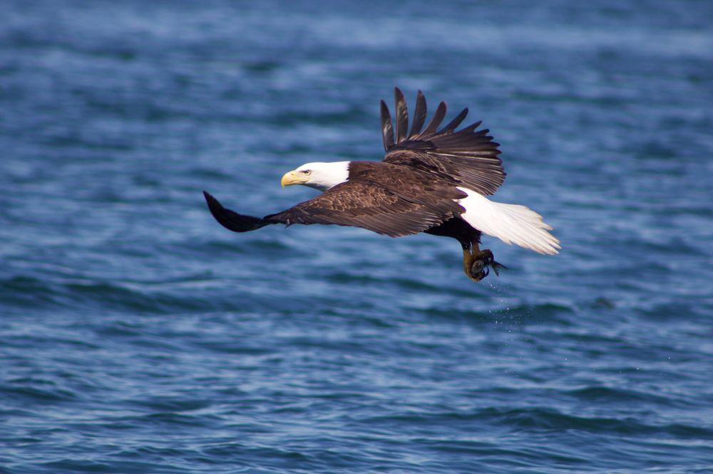 Seaman's Ecotour Adventures: 4300 Frieght Dock Rd, Homer, AK