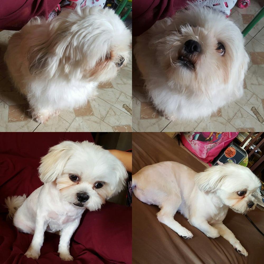 Pacific paws pet salon 13 reviews pet groomers 820 w for 4 paws pet salon