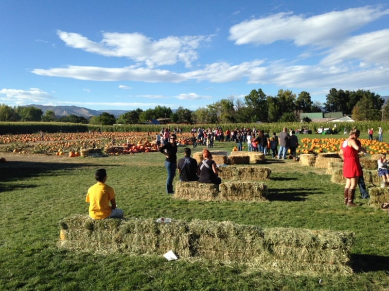 Image result for Diana's Pumpkin Patch and Corn Maze