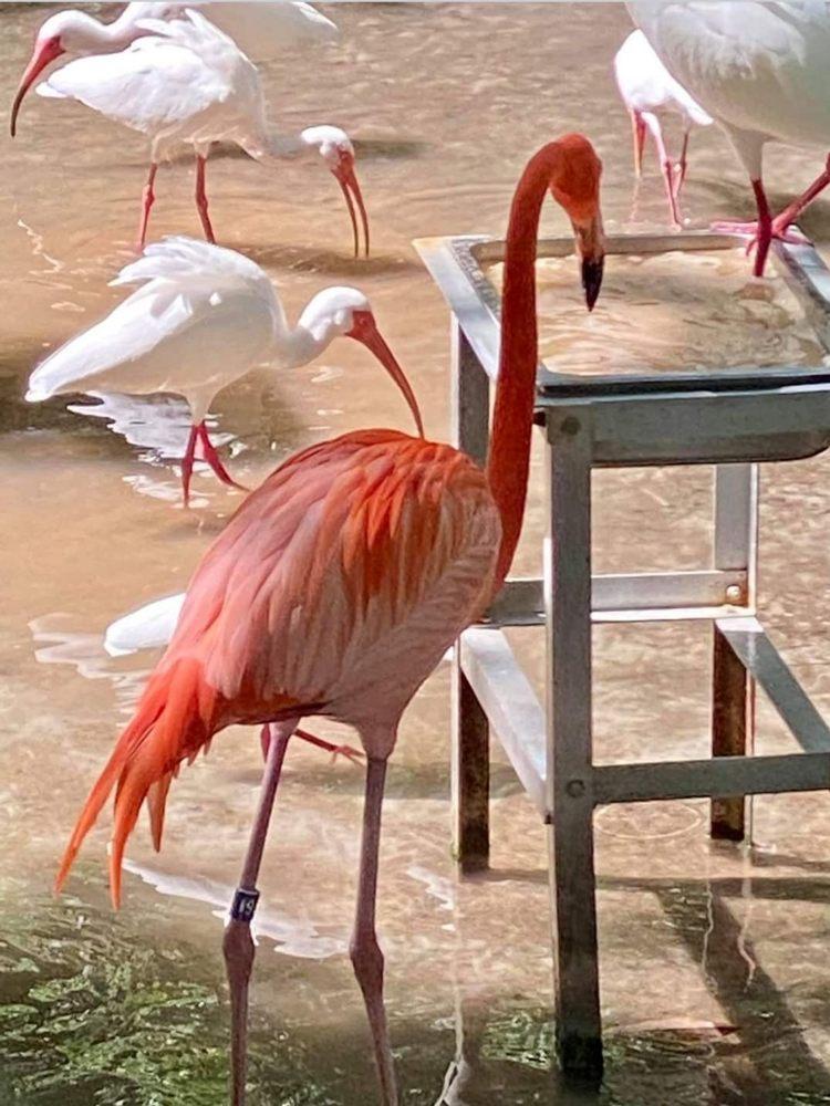 Homosassa Springs State Wildlife Park: 4150 S Suncoast Blvd, Homosassa, FL