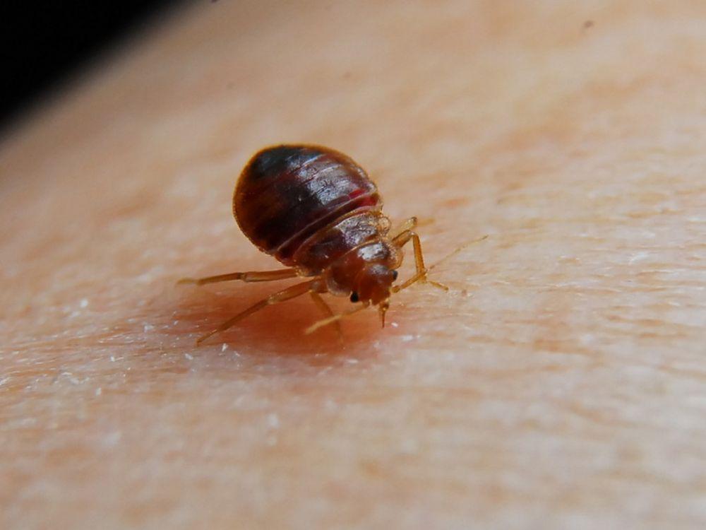 Evolve Pest Control - 18 Photos & 30 Reviews - Pest Control - 5130 ...