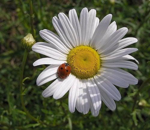 Ladybug's Flowers & Gifts