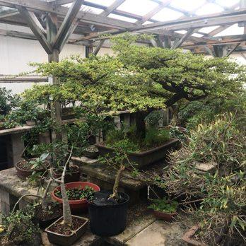 Photo Of Bonsai By Penjing Bonsai Garden   Malabar, FL, United States