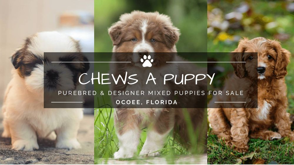 Chews A Puppy - 458 Photos & 20 Reviews - Pet Adoption