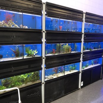 Clear water aquarium 22 photos 17 reviews local fish for Local fish stores