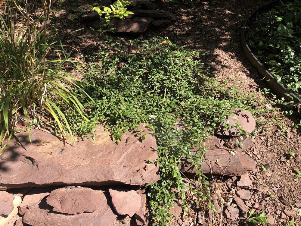 D W Doughty Landscape & Hilltown Nursery: 915 Rt 152, Perkasie, PA