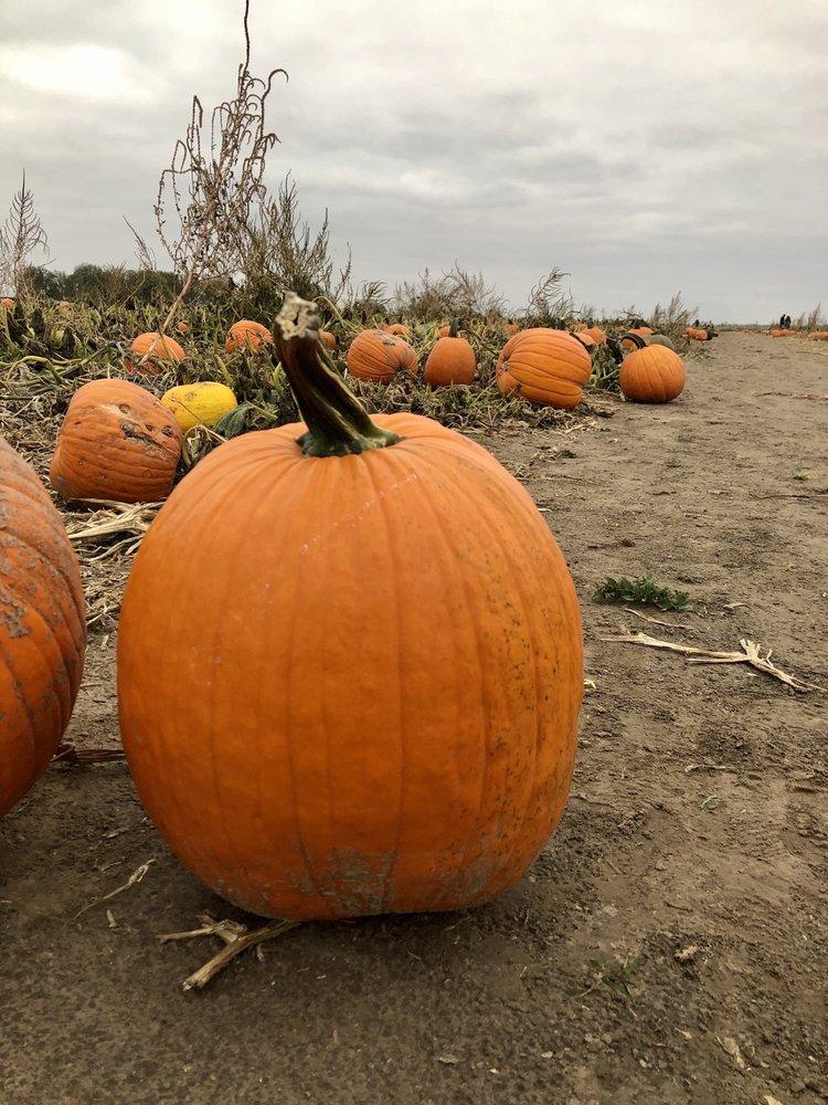 Schaake Pumpkin Patch: 1791 N 1500th Rd, Lawrence, KS