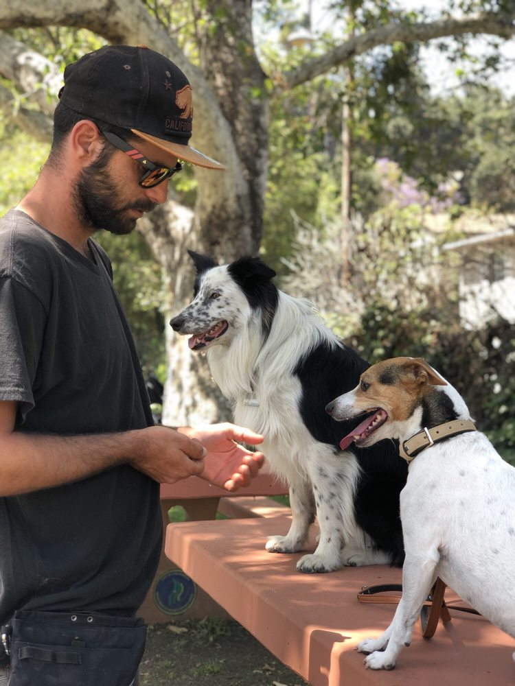 Ben Fadlon Dog Trainer
