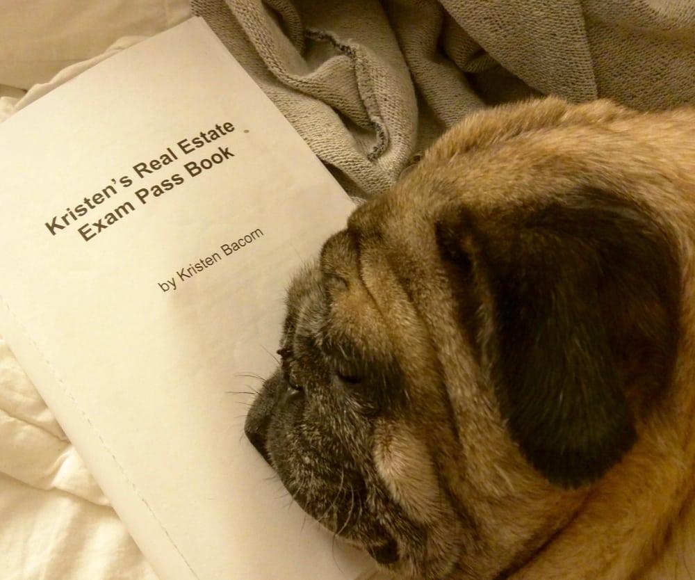 Junebug stealing my Kristen Bacorn book   again  - Yelp