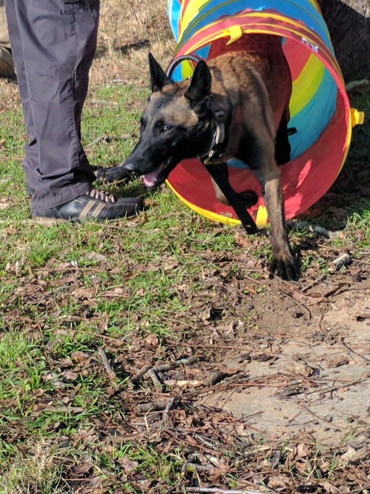 Eastside Dog Training