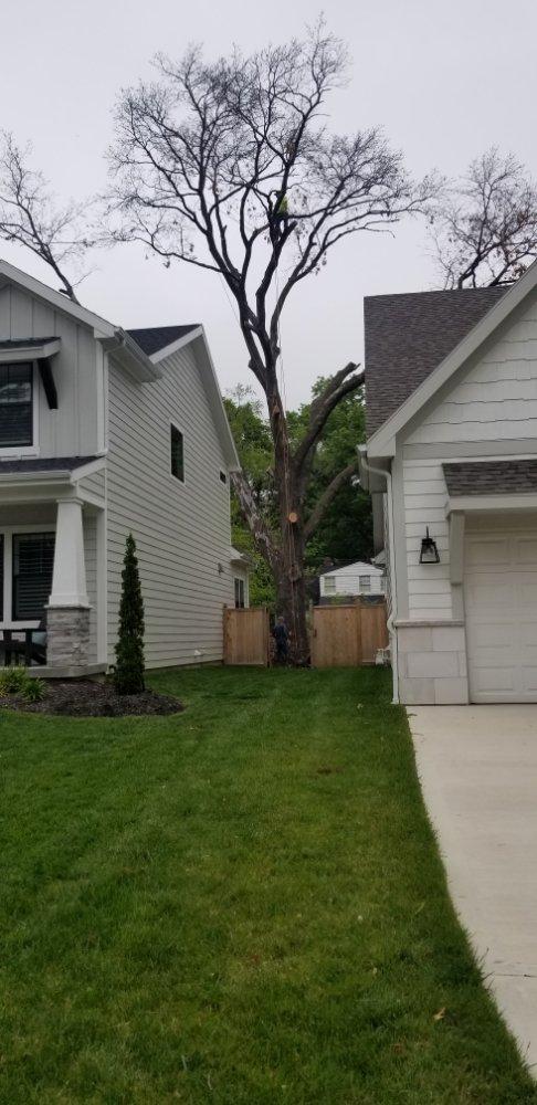 Stoyko's Tree Service: Holden, MO