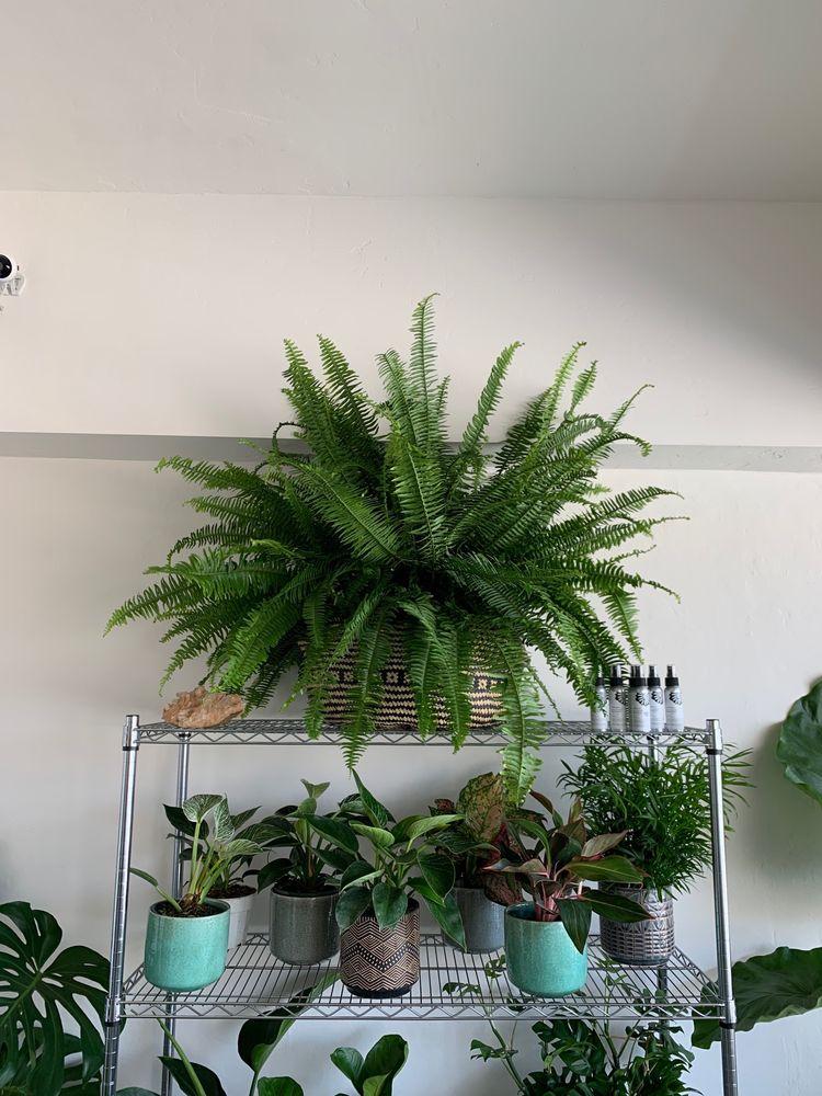 Dirty Girl Plant Co: 77 Soledad Dr, Monterey, CA