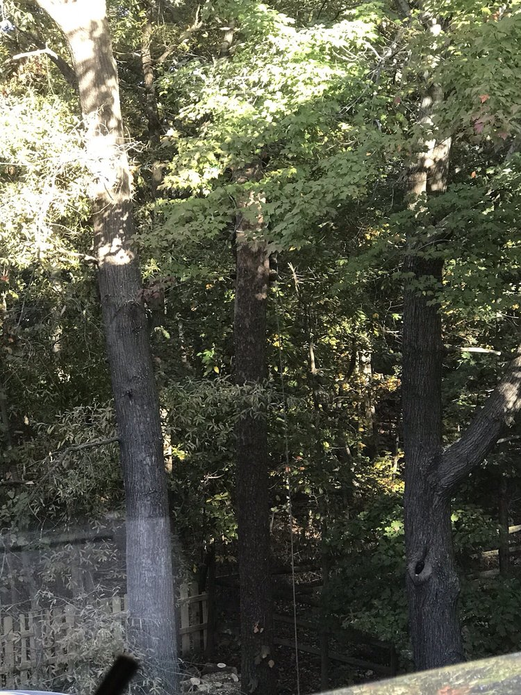 Tino's Landscaping: Sterling, VA