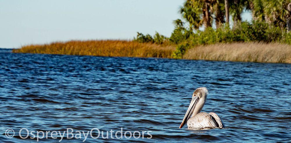 Osprey Bay Kayaks: 160 N Belcher Rd, Clearwater, FL