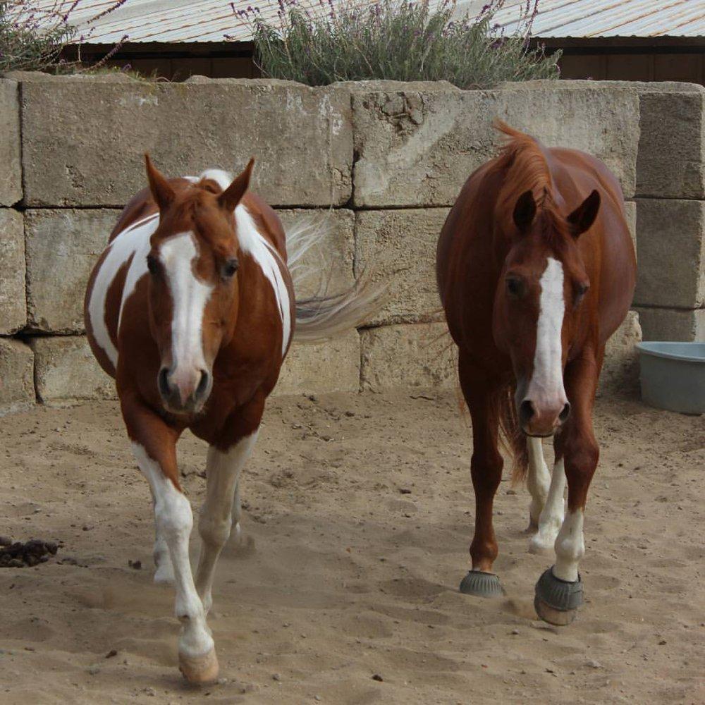 Sun Valley Equestrian: 6090 CA-1, Montara, CA