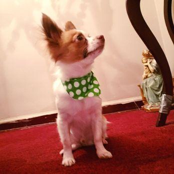 Petco - 51 Photos & 30 Reviews - Pet Adoption - 6135