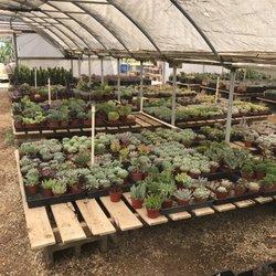 Cactus Mart 69 Photos 31 Reviews Nurseries Gardening 3571 Howe Rd Fillmore Ca Phone Number Yelp