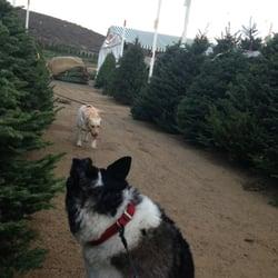 pinery christmas trees - Pinery Christmas Trees