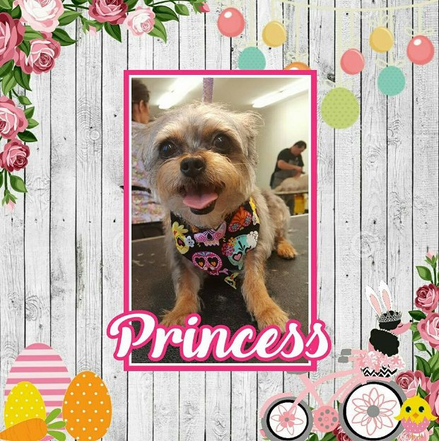 Diamond in the Ruff Pet Salon: 1410 Drakley Ave, Atwater, CA