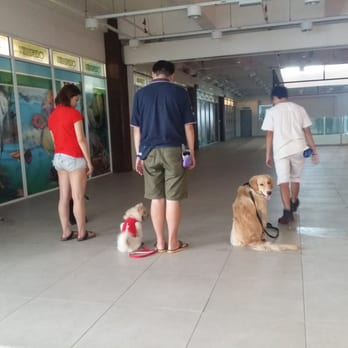 Dog Lovers Training Course Review
