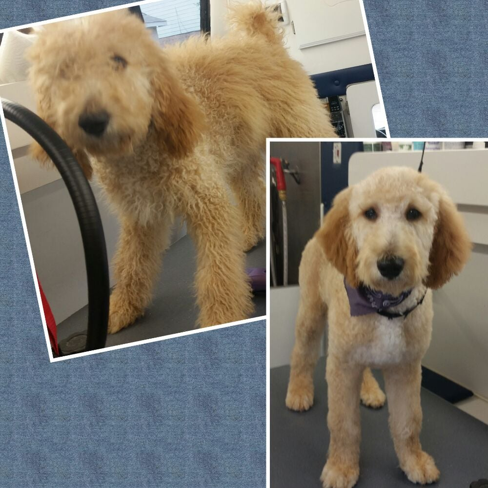 Scruffy To Fluffy Mobile Pet Grooming: Anna, TX