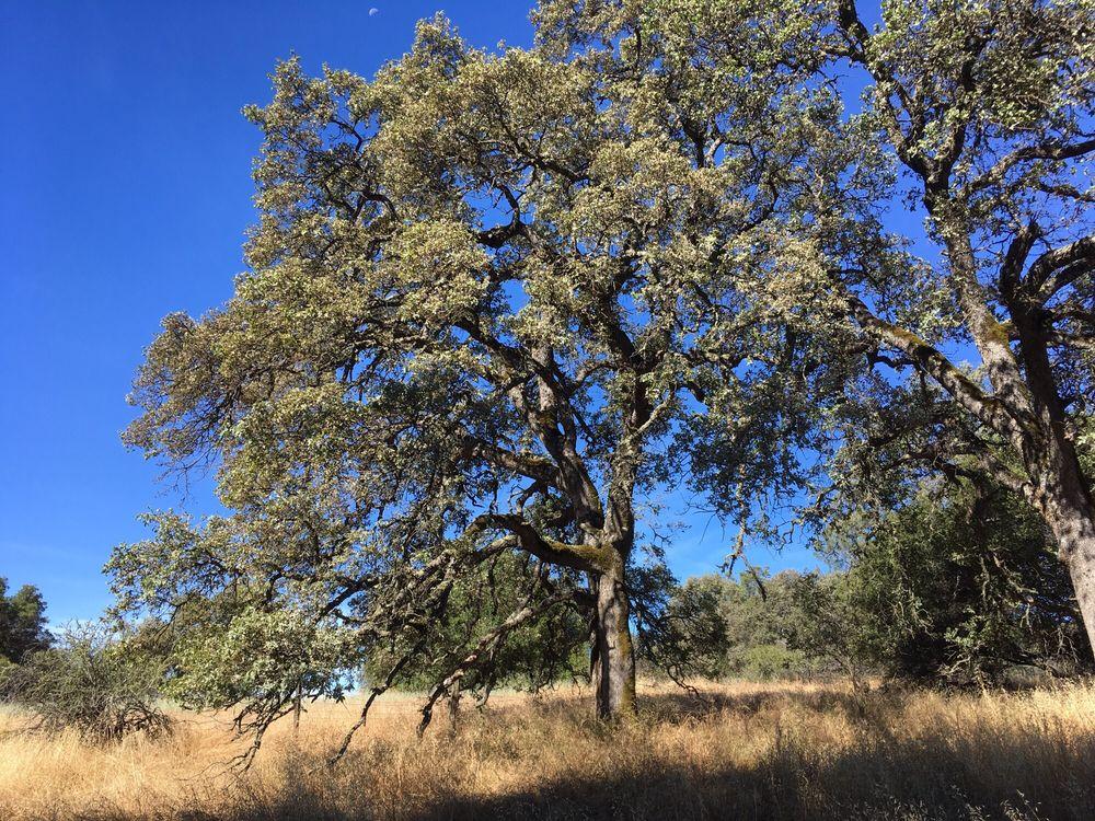 Olmstead Loop Trail: Behind Fire Station, Cool, CA