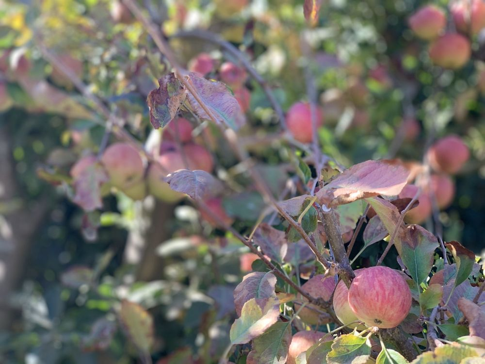Clearview Orchards: 646 Trabing Rd, Watsonville, CA