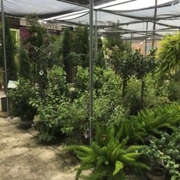 Photo Of Cornelius Nursery Houston Tx United States