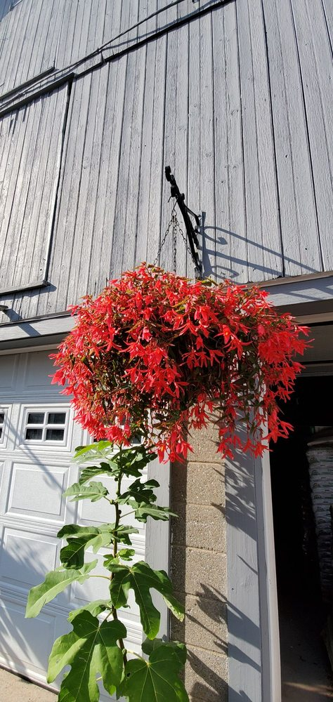 Mum Farm: 9011 Red Hill Rd, New Hartford, NY