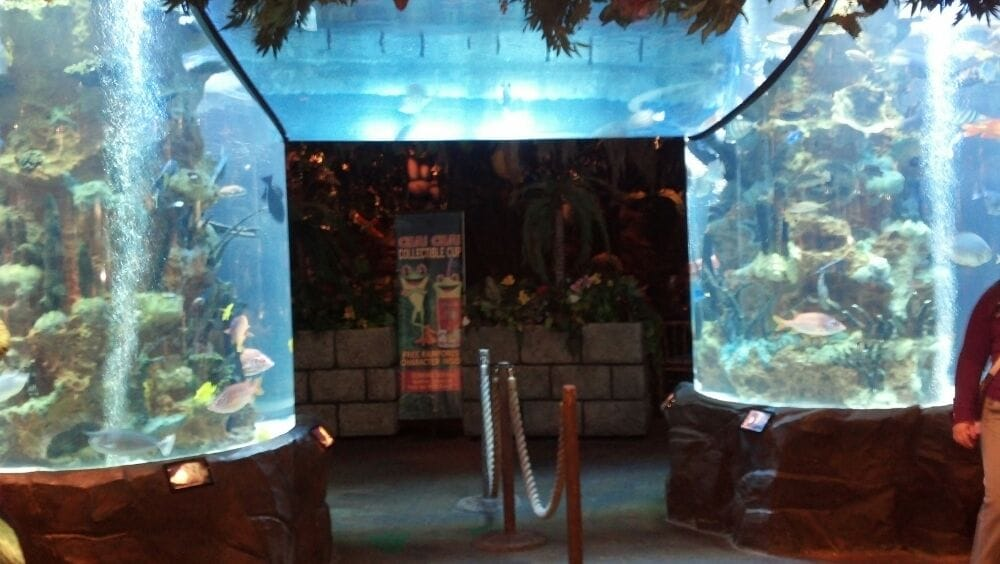 Photo of Rainforest Cafe - Edison, NJ, United States. Pretty fish tank
