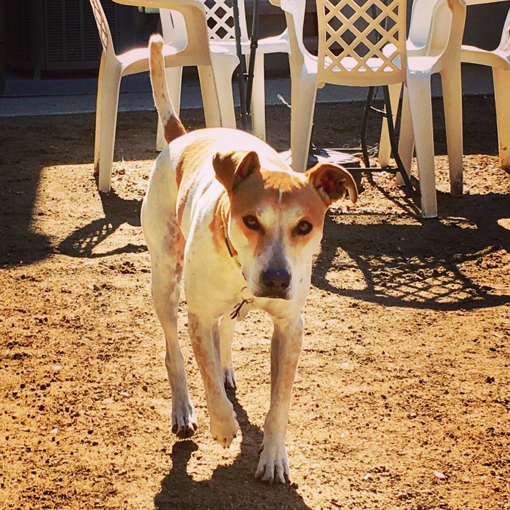 Newbury Bark: Newbury Park, CA