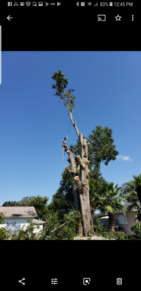 Mike's Tree service: 11705 Key Lime Dr, New Port Richey, FL